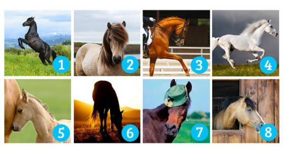 Choose the most beautiful horse: Your choice reveals what you expect in life and whether you're going to get it