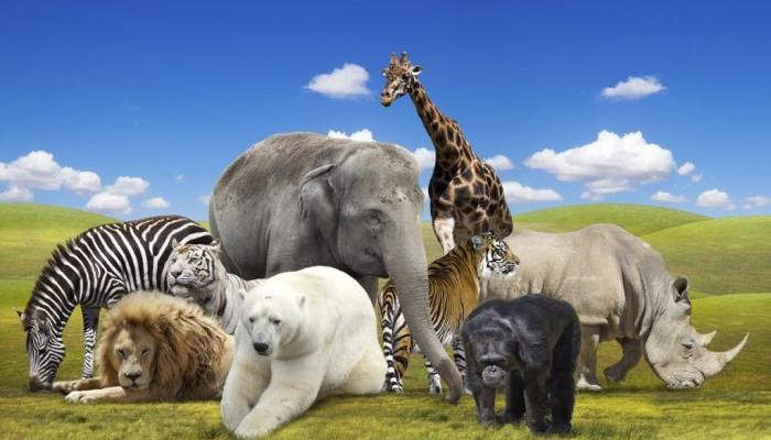 Pick an animal and find out how other people see you